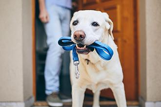 愛犬と暮らすペットリフォームのいろは